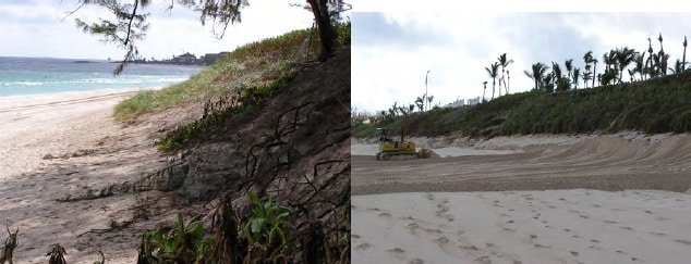 Partially re-vegetated dune (background) on Paradise Island. Scraping sand back to dune after H Frances, Paradise Island.