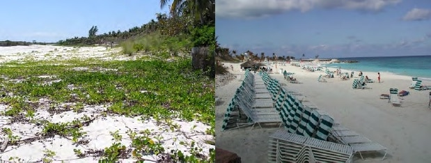 Natural beach regeneration after H Floyd, Windermere Island, Eleuthera Replenished beach on Paradise Island immediately after H Michelle, 2001.
